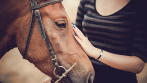 Equine Internet Style - Horse Site Marketing and advertising